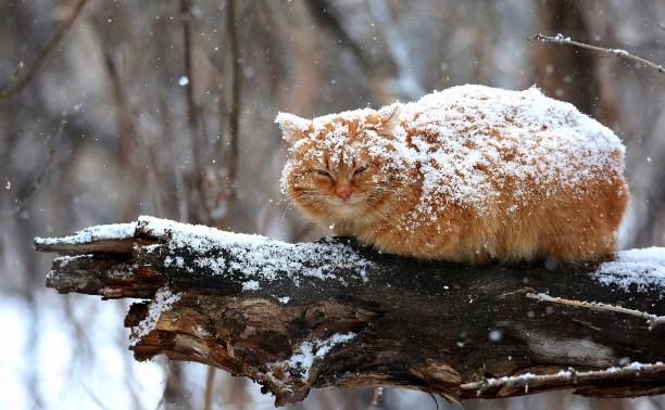 Найближчими днями в Україні може випасти до 20 см снігу, – синоптики - циклон - 28 sneg2