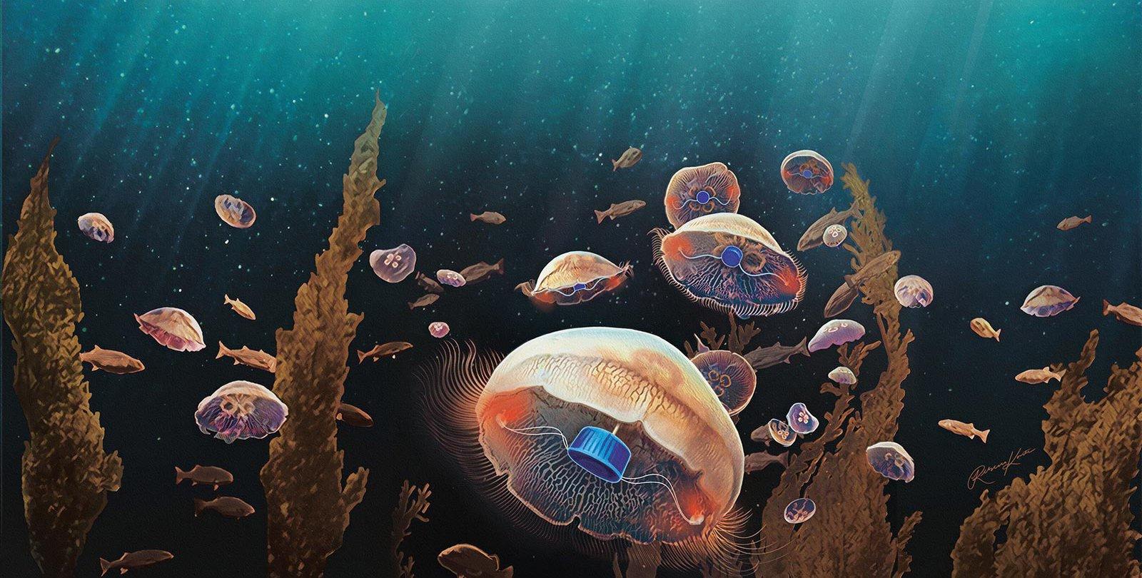 Біоінженери створюють медуз-кіборгів для вивчення океану - океан - 31 meduzy