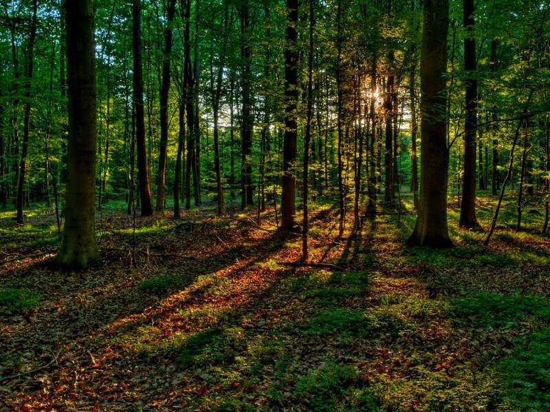Переяславська РДА незаконно розпорядилася землями лісового фонду -  - 3b91a895bf5e8012fc819f5018b1aae9