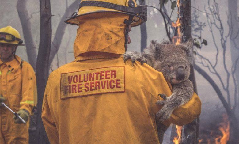 Пожежі в Австралії: загинуло понад 1 млрд тварин - тварина, пожежа, планета - 406F72B5 6281 4CD7 9AED 2358851222C7