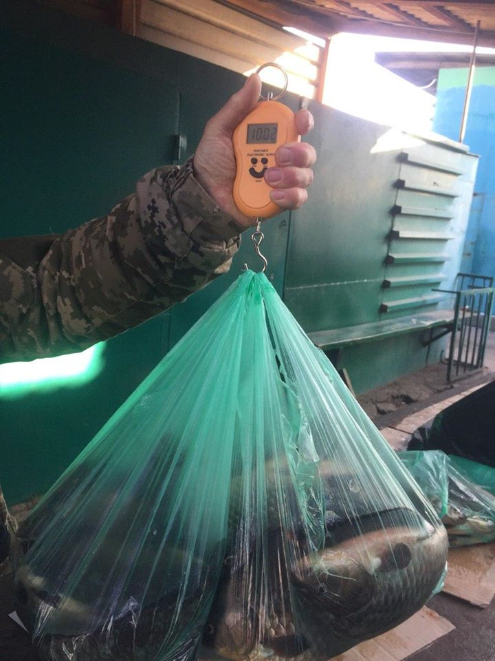 На ринку Богуслава викрито нелегальних реалізаторів риби -  - 81711351 2690528084357033 1122921600425918464 o