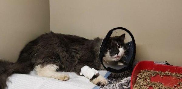 Рятівники тварин зняли кота з мосту Патона -  - 81831067 2548067905439110 3675431908663099392 n