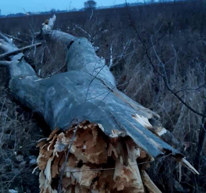 Пів Борисполя знову без світла, причина — вітер та сухостій -  - 82538786 479155966338696 4430066608987176960 n