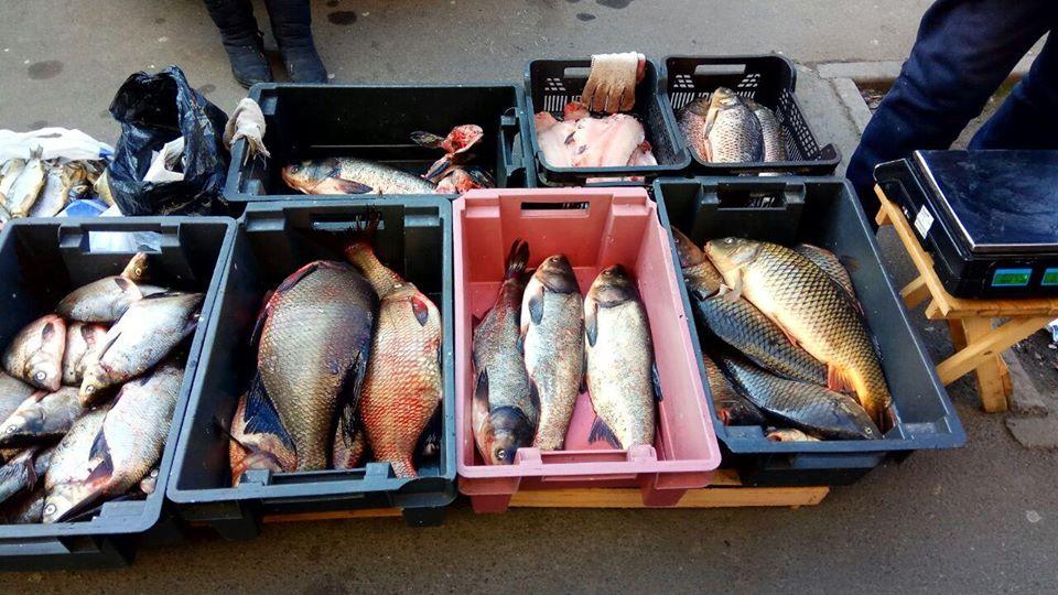 Інспектори рибоохоронного патруля Київщини продовжують виявляти порушників -  - 82584333 2720820587994449 3406842233272401920 o