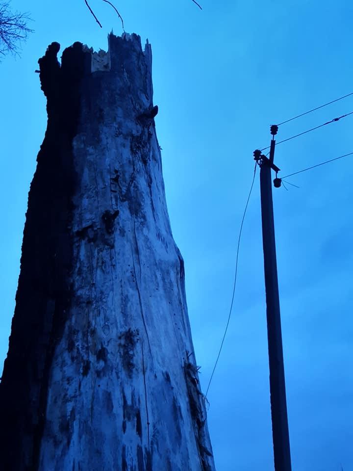 Пів Борисполя знову без світла, причина — вітер та сухостій -  - 82842144 479155916338701 7082101462775365632 n