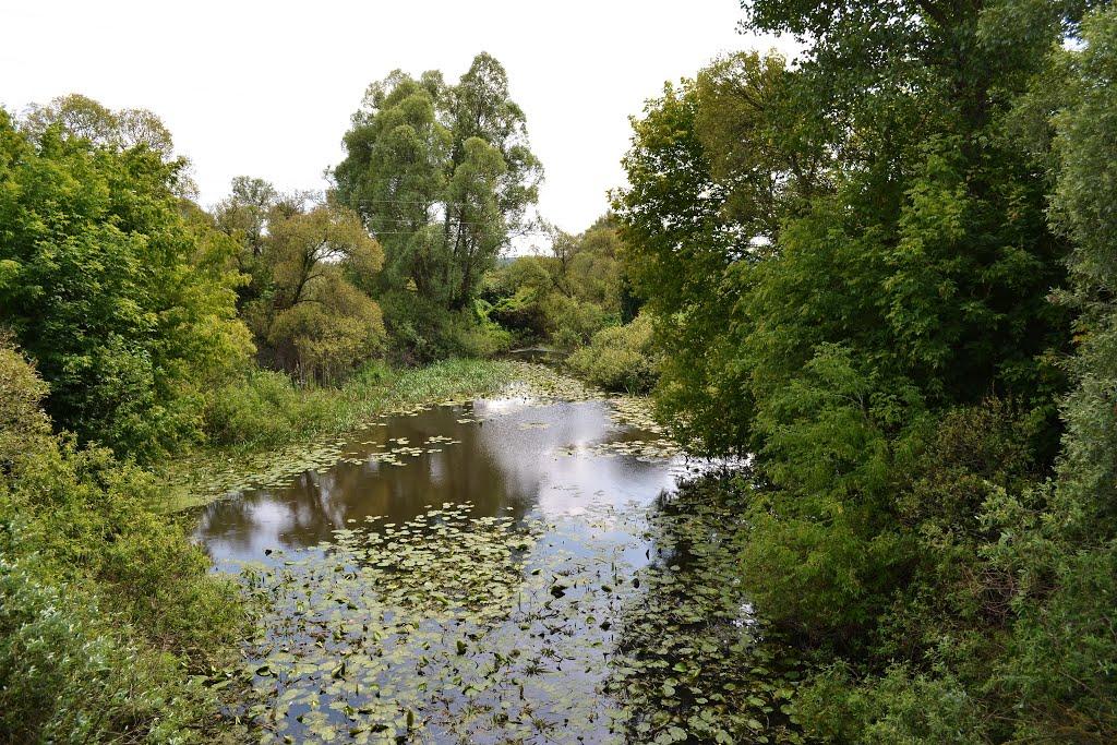 Ледь не щодня в Україні зникає ОДНА річка - маловоддя - 83349894