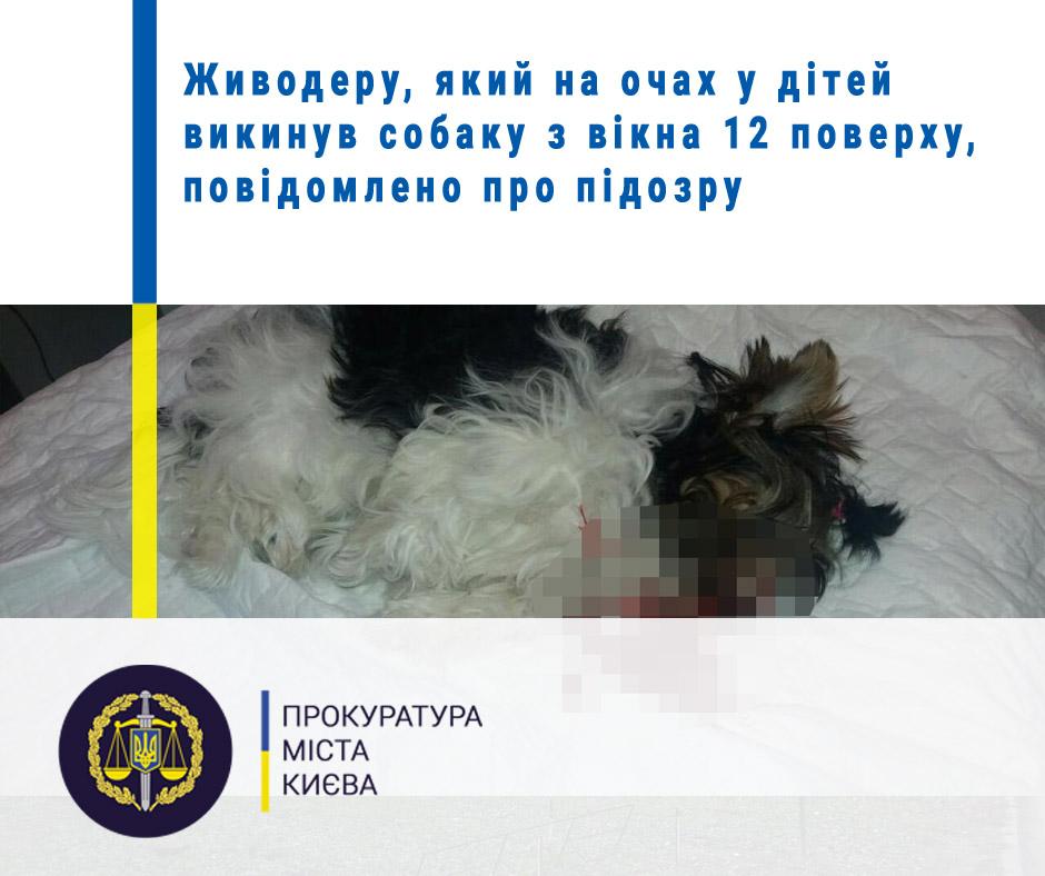 83351157_3143965512281456_7853218636968755200_n Від 5 до 8 років в'язниці чекає на киянина за вбивство пса