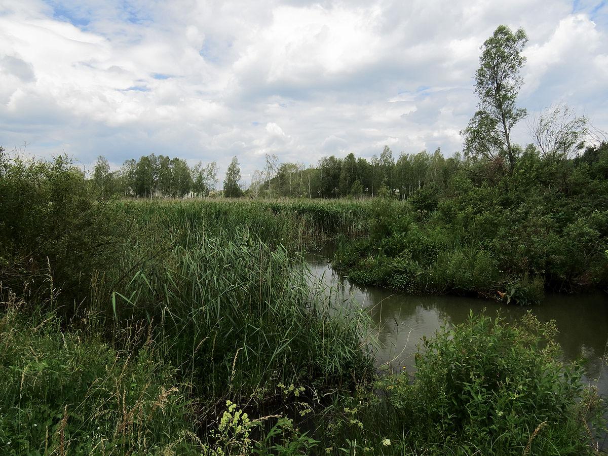 Ледь не щодня в Україні зникає ОДНА річка - маловоддя - Bucha river1