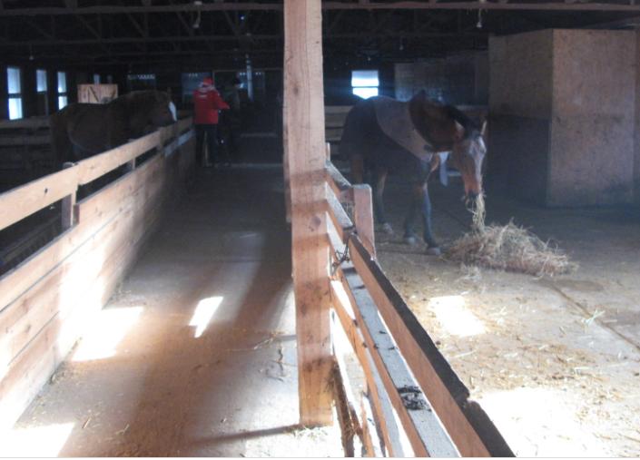 Screenshot_10-1 Їжа є, потрібні ветеринари: волонтер з Обухова розказав про стан справ щодо покинутих тварин «Натураліста»