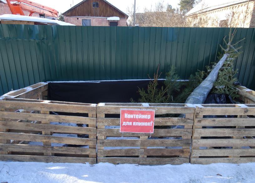 Зелені красуні – на подрібнення: в Ірпені працюватимуть пункти збору новорічних ялинок - Приірпіння, київщина, ірпінь, екологія, благоустрій - Yalynky