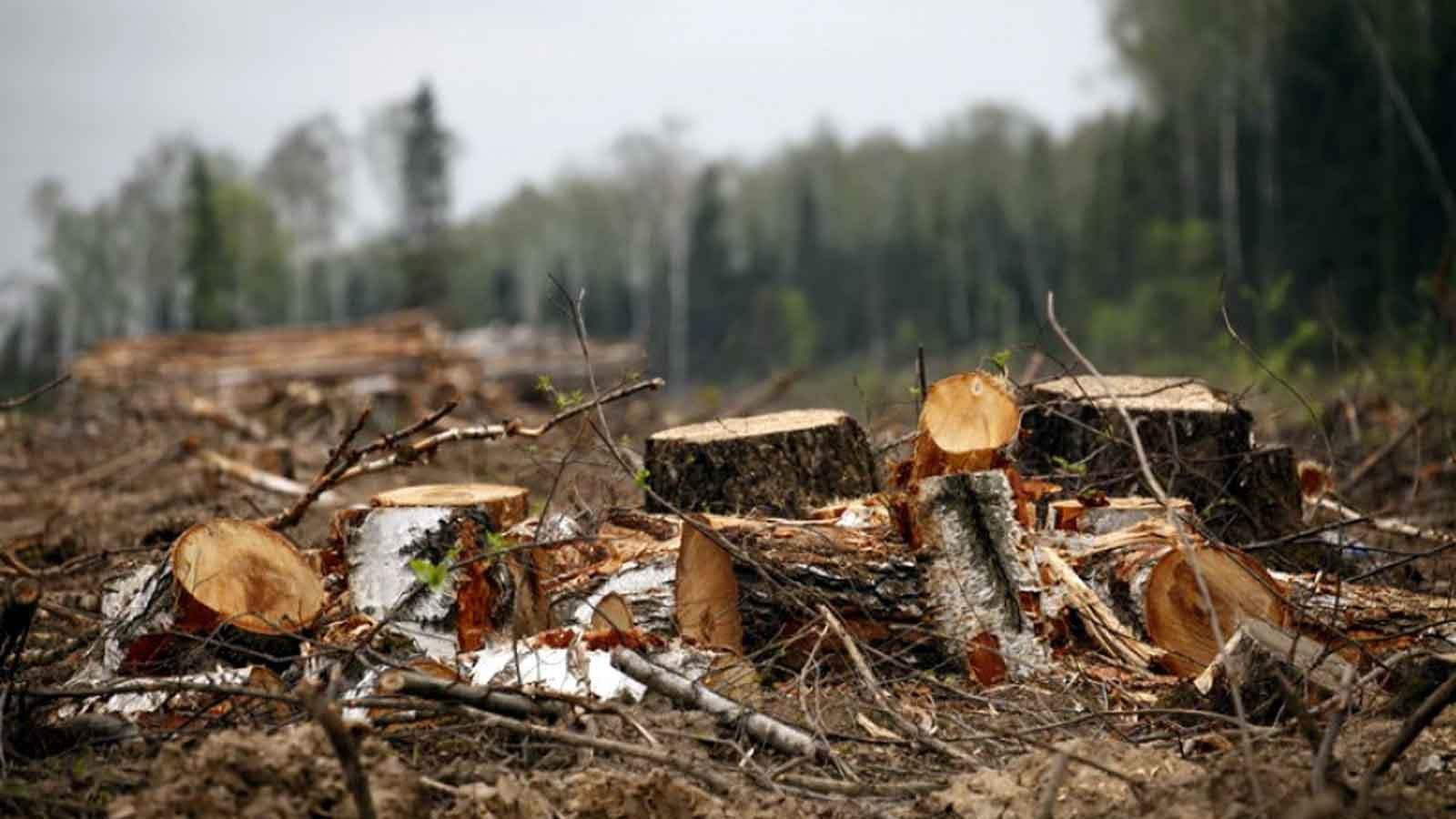 На Білоцерківщині незаконно вирубали ліс на суму 1,6 млн грн, – Офіс Генпрокурора - Білоцерківський район - huge 17e1963a 004f 4a13 9fde b89aec73ca27