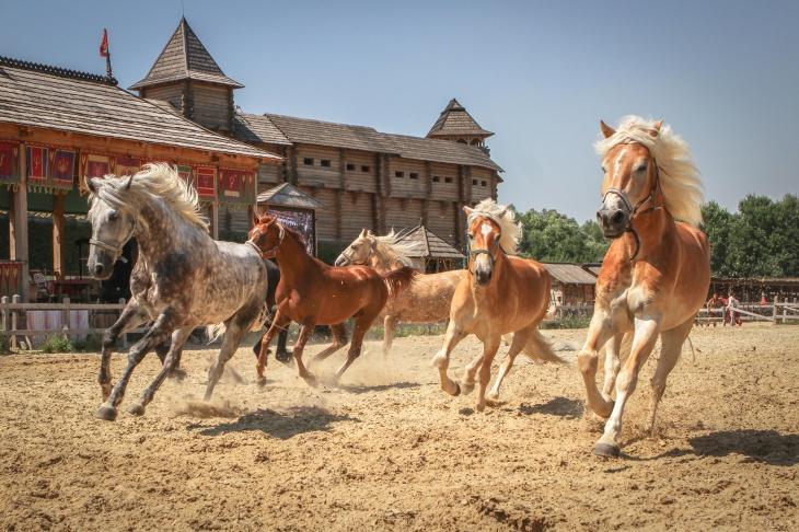 """""""Світ коней"""": парк «Київська Русь», що на Обухівщині, запрошує на шоу-виставку -  - image 5aa596f6b3dcf7.07120708"""