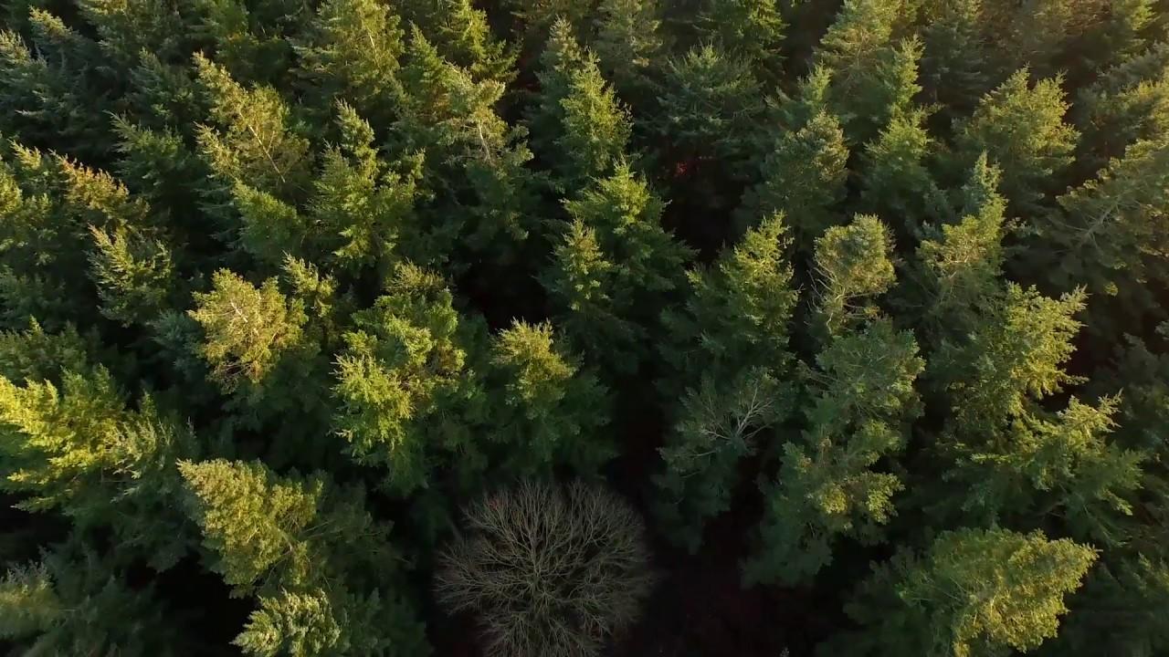 lisOK На Іванківщині незаконно вивели з держвласності землі лісового фонду