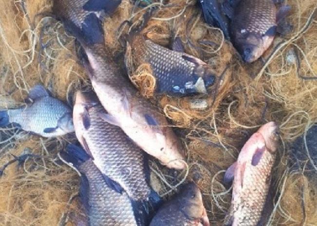 На Вишгородщині браконьєр наніс збитків майже на 8,5 тисяч гривень - київщина, Київський рибоохоронний патруль, Вишгородський район, браконьєр - tereiv1obr