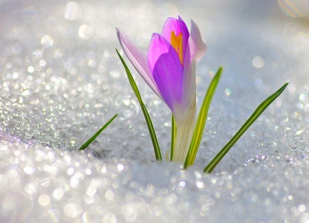 tmb_180823_3014 Весна 2020: якої погоди чекати українцям