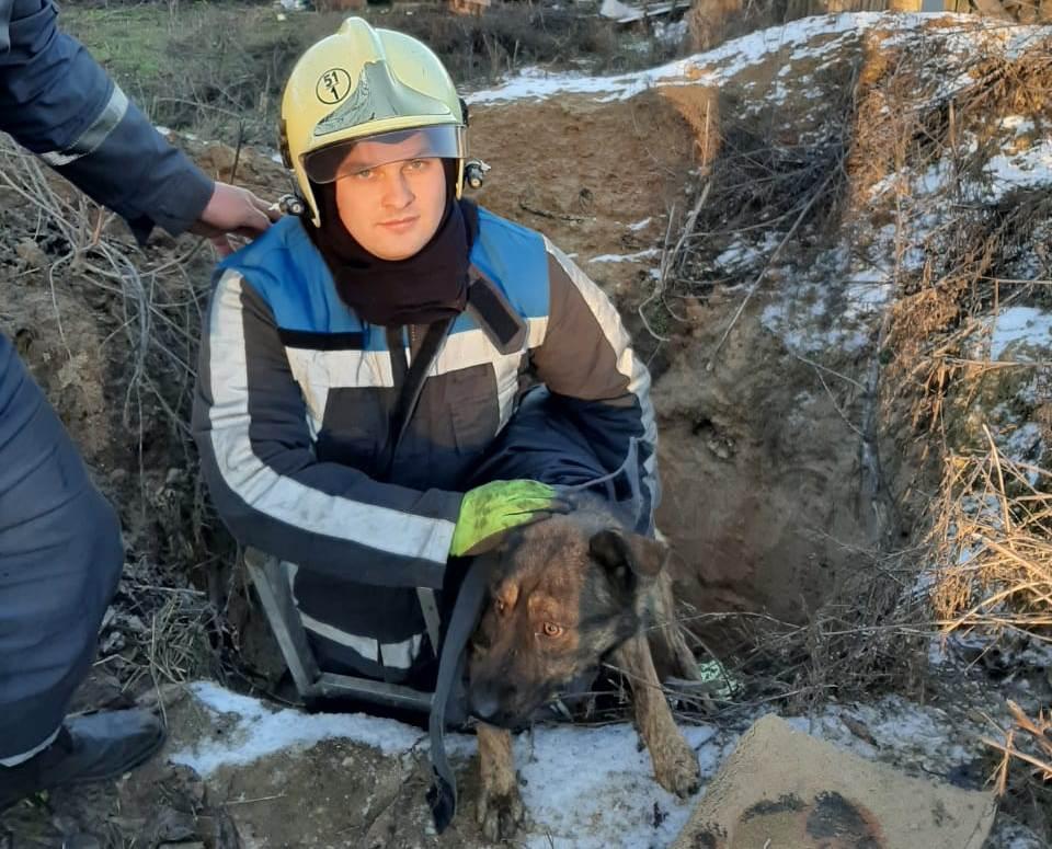 У Тарасівці рятувальники витягнули собаку з трьохметрового колодязя -  - yzob23razhenye viber 2020 01 09 08 22 05