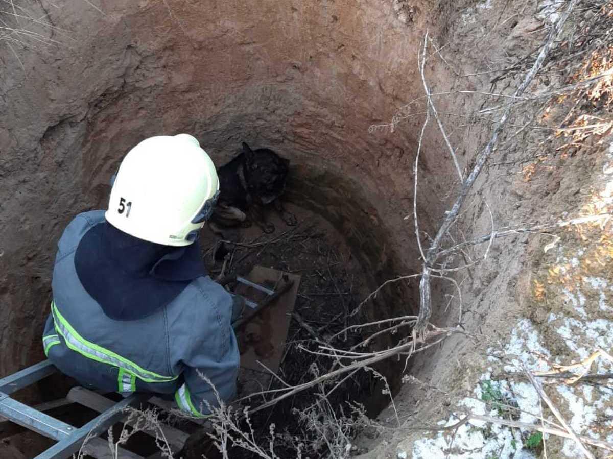 У Тарасівці рятувальники витягнули собаку з трьохметрового колодязя -  - yzobrazhenye viber 2020 01 09 08 22 04