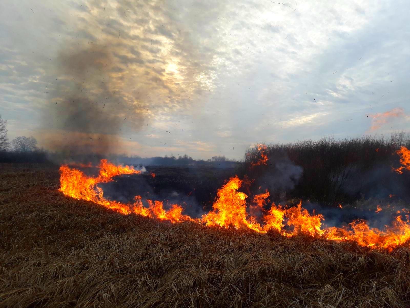 02-3 На Київщині масштабні пожежі сухостою: на Бородянщині горіло більше 23,5 га трави