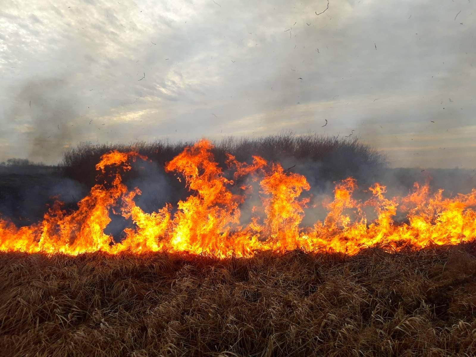 05-2 На Київщині масштабні пожежі сухостою: на Бородянщині горіло більше 23,5 га трави