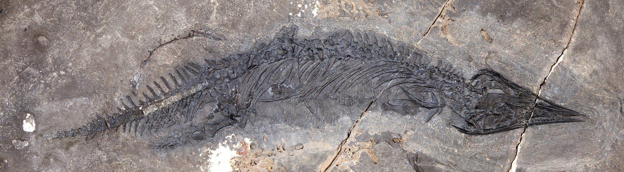 06_dynozavtr-2000x552 Доісторична знахідка: на Алясці знайшли новий вид попередників динозаврів