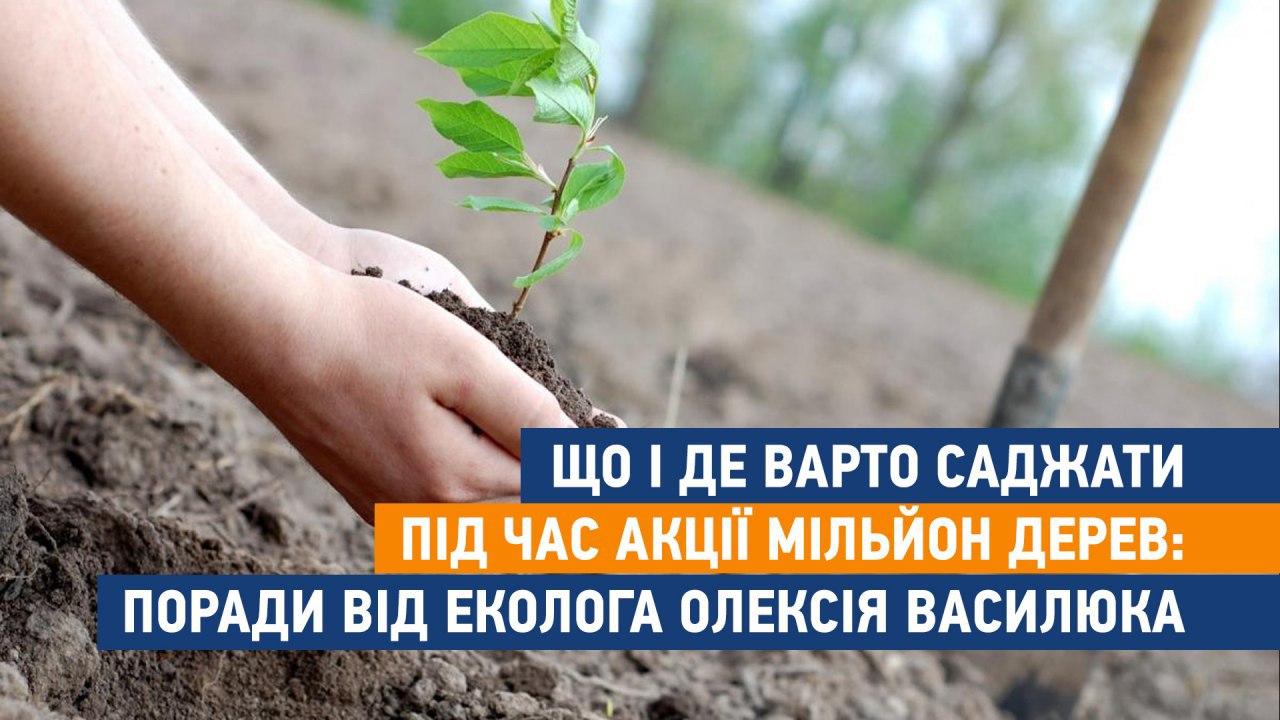 12_dereva2-2 Що і де варто саджати під час акції мільйон дерев: Поради від еколога Олексія Василюка
