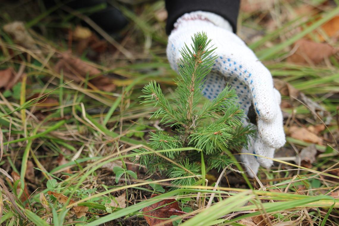 5 млн за день і 10 млн за тиждень: в Україні планують за сім днів відновити ліси - ліс - 28 dereva2
