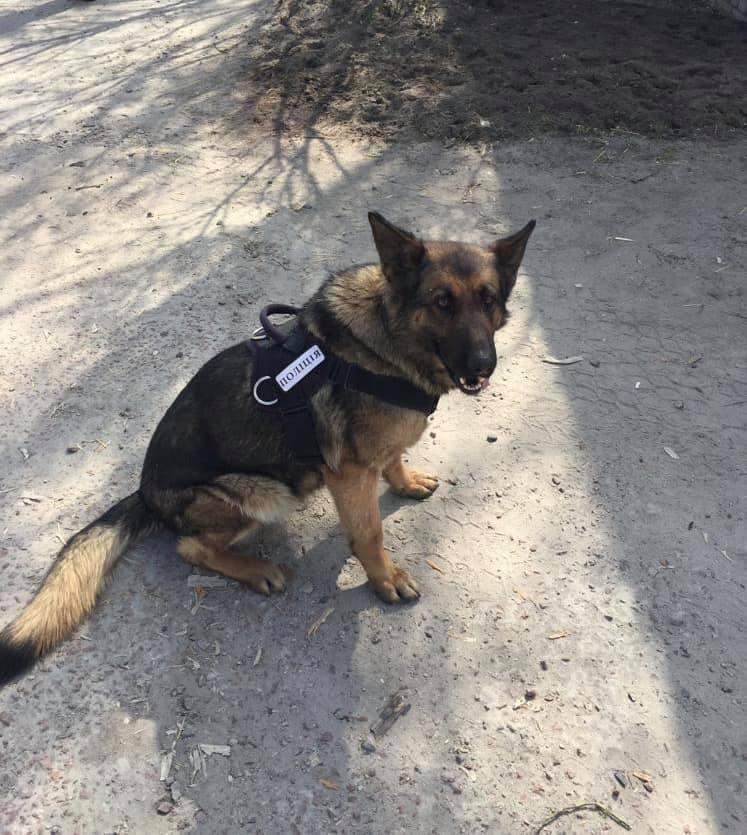 88059951_2065341830276683_7230850383692693504_n Наркотики знайшов службовий пес: на Обухівщині поліцейські вилучили у ділка кілограм конопляного зілля