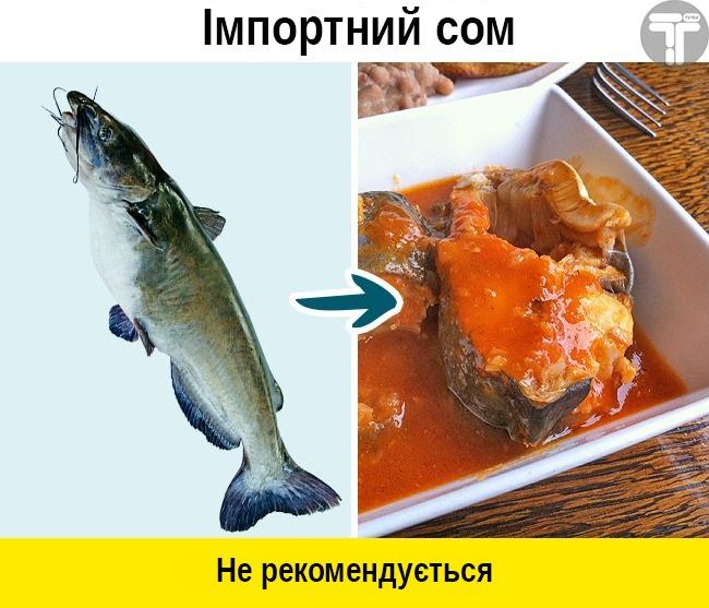 У Держрибагентстві розповіли, яку рибу небезпечно вживати -  - 88197034 2799386200137887 3116501769752936448 n