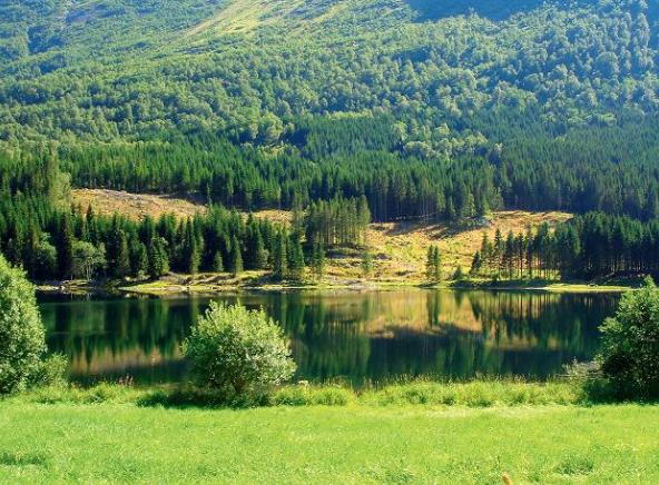 Прокуратура вимагає передати право власності на земельні паї загальною вартістю понад 2 млн грн територіальним громадам Іванківщини