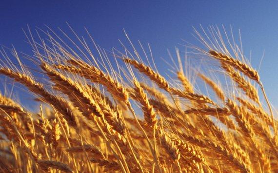 fullnewsi-15208241860 Овочі здешевіють, а хліб подорожчає :  українські аграрії прогнозують наслідки цьогорічної зими