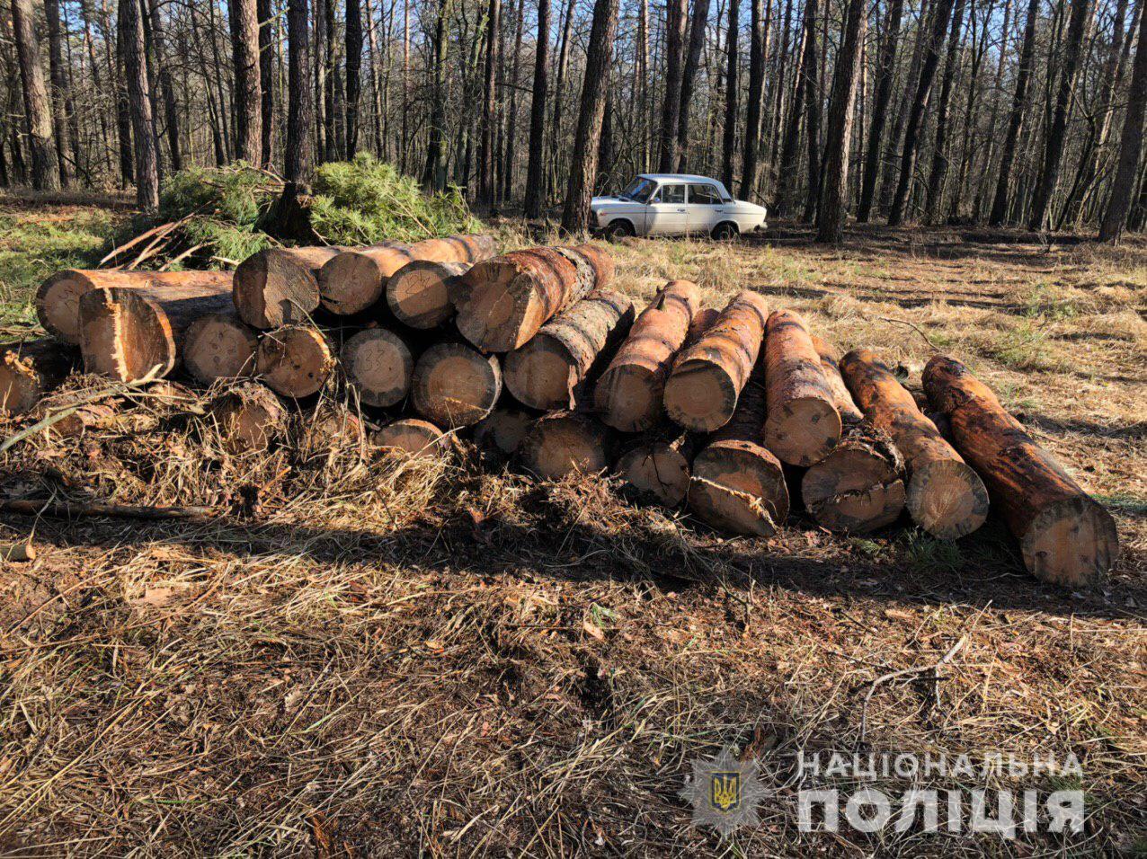 На Переяславщині незаконно вирубували ліс: поліція відкрила кримінальне провадження - Переяслав, незаконне вирубування лісу - lispereyaslav1
