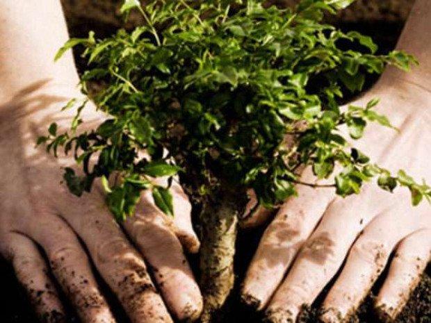 До озеленення Білої Церкви залучили іноземних фахівців - озеленення, Біла Церква - t 1 oz