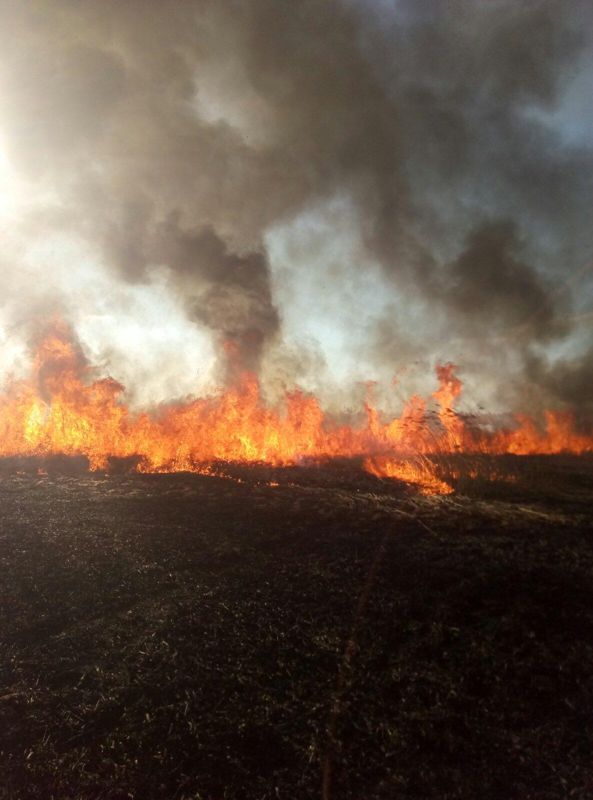 На Київщині знову масово палять траву: рятувальники б'ють на сполох - трав'яний настил, пожежі, київщина - 0 02 0a efa1009075ae588d273b15e7024f180986cc18a93db2c9d17c72eeacc3c19ae0 764301e1