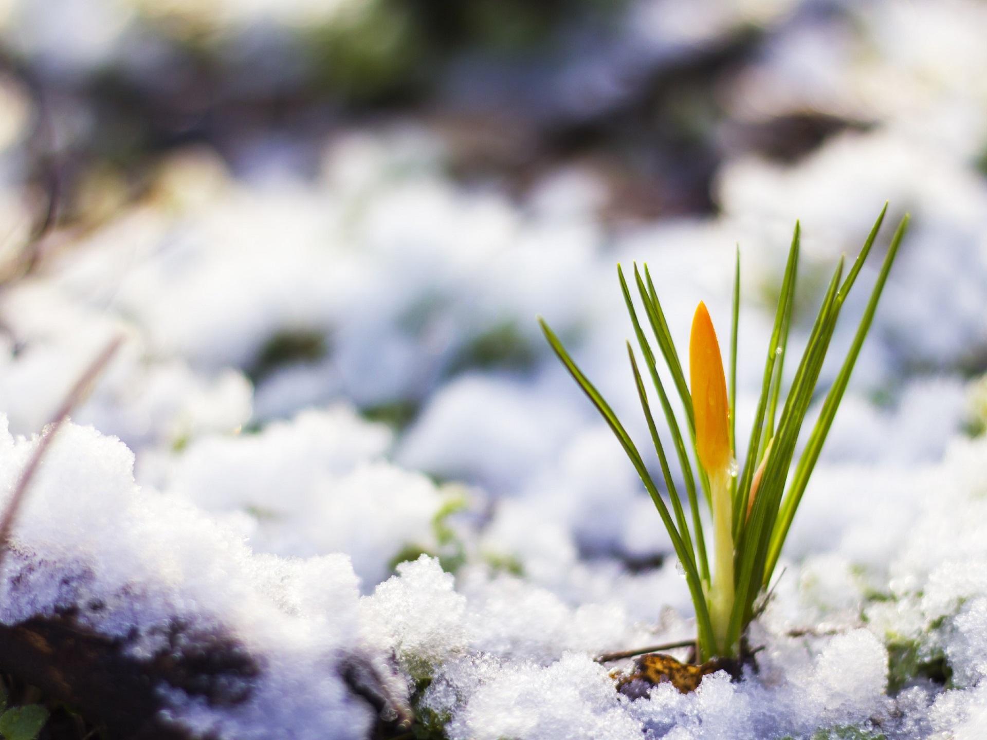 Вперше за 140 років до столиці так і не завітала метеорологічна зима - ЦГО, Зима - 02 zyma