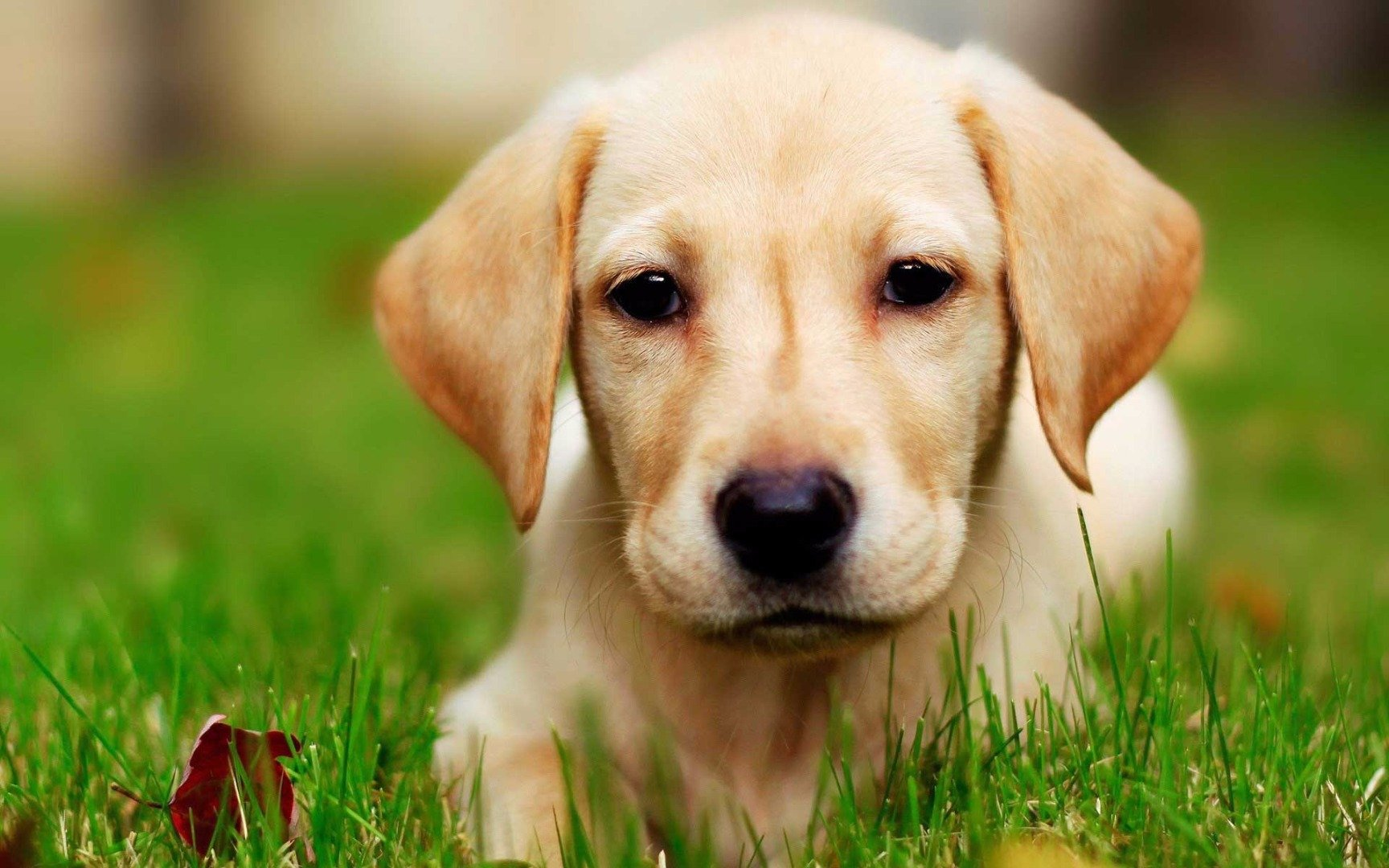 Україна заборонила ввозити тварин з Китаю: у Гонконгу коронавірусом захворіла собака - собака, коронавірус - 03 sobaka