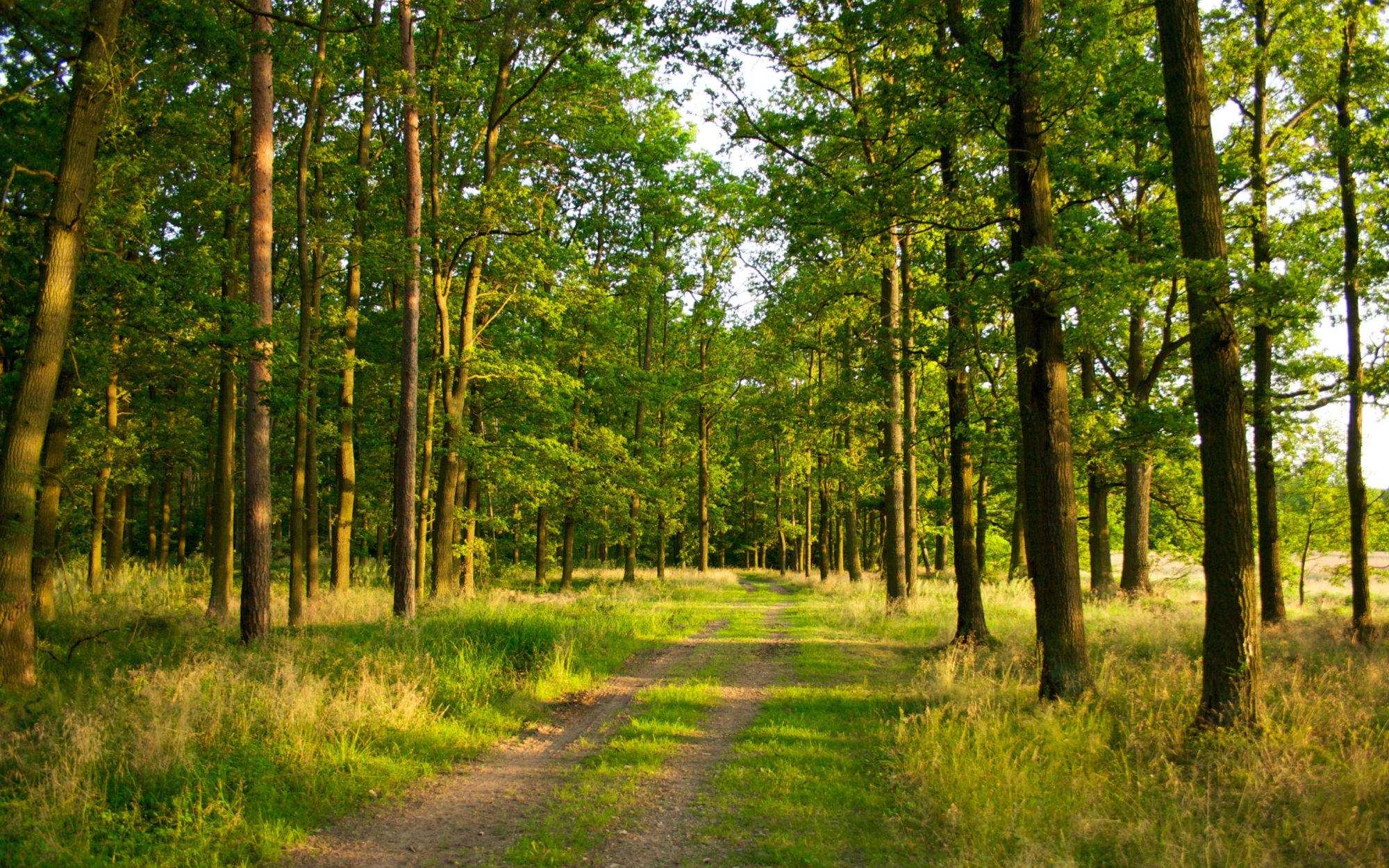 На Бородянщині 1 га лісу вартістю понад 1 млн грн передали у приватну власність - лісгосп, Клавдієво - 11 zemlya 2000x1250