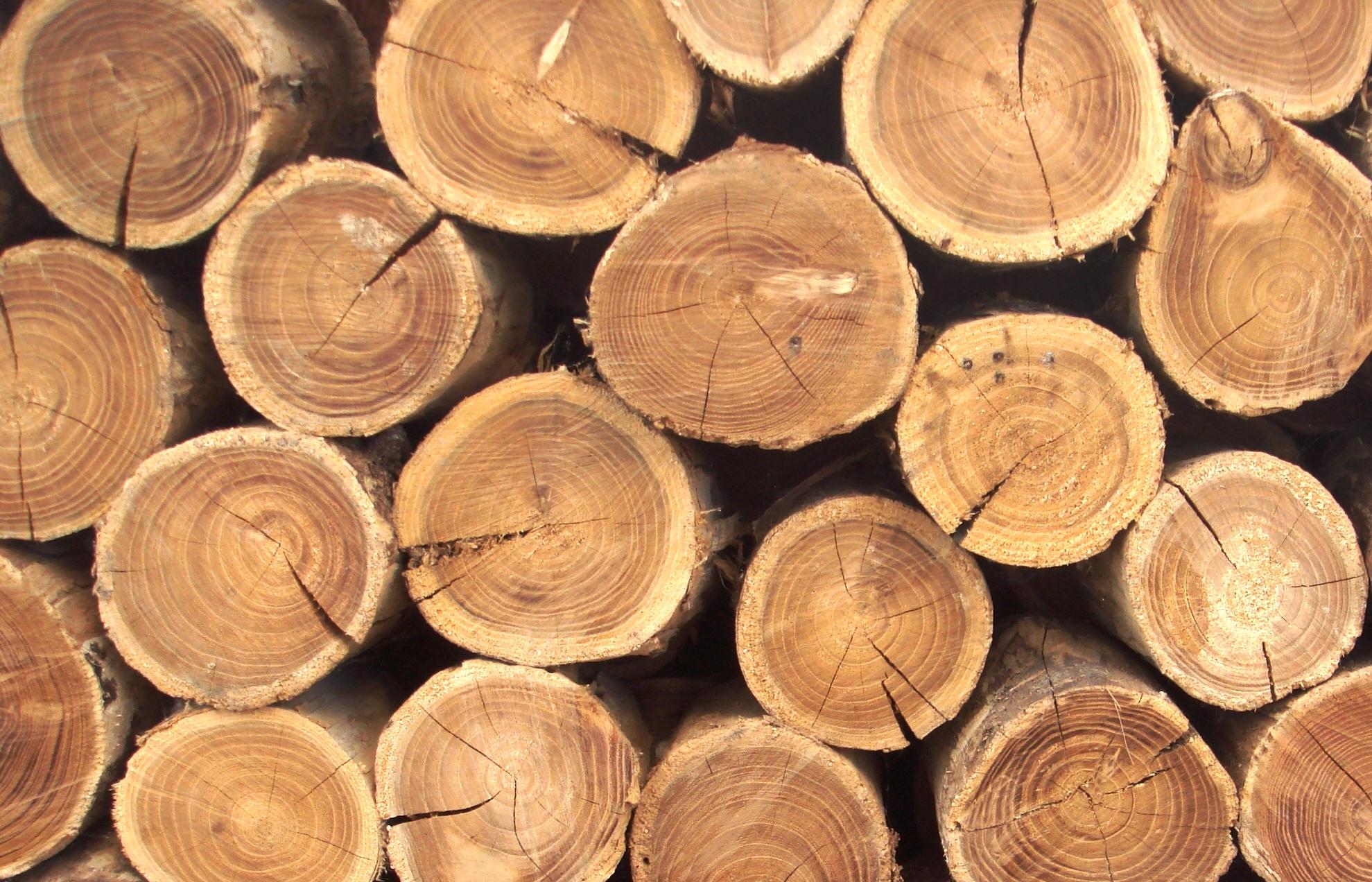 Українці зможуть контролювати та відслідковувати заготівлю деревини в країні - дерево - 12 derevyna