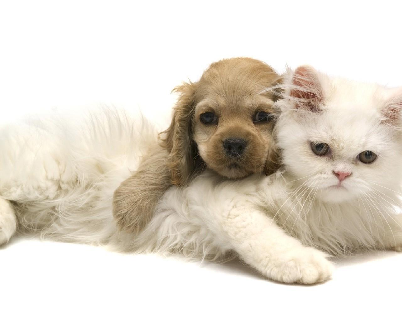 Вони теж хочуть їсти: ветеринари закликають не закривати зоомагазини і ветаптек в Україні - Тварини, коронавірус, карантин - 19 veterynar3 1