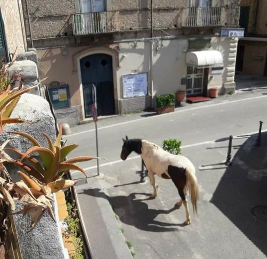 В спорожнілих через карантин містах почали з'являтися дикі тварини - Тварини, коронавірус, карантин - 20 goroda3