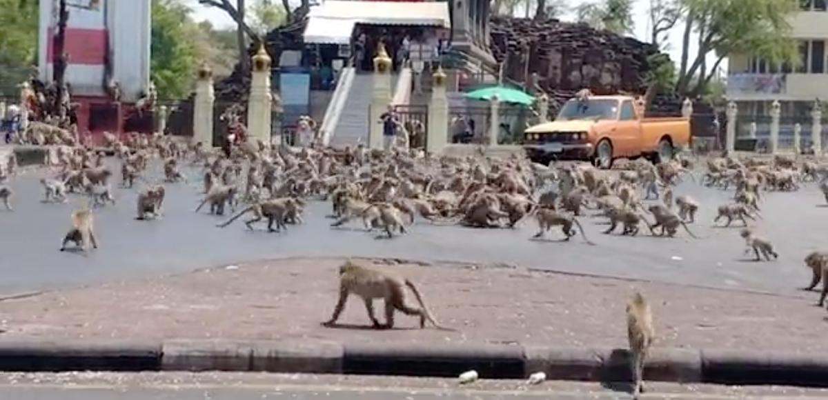 В спорожнілих через карантин містах почали з'являтися дикі тварини - Тварини, коронавірус, карантин - 20 goroda4