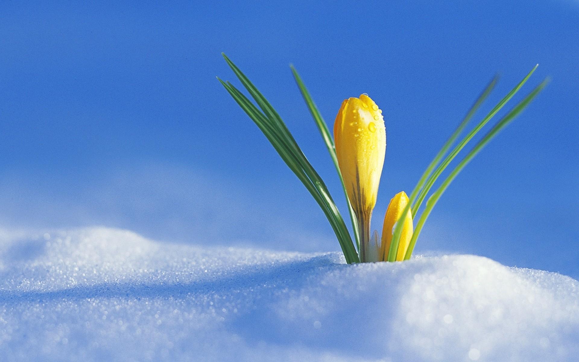 На вихідних на Київщину повернеться зима: в Україну забіжить арктичне повітря - прогноз погоди на вихідні, погода на вихідні - 21 pogoda3
