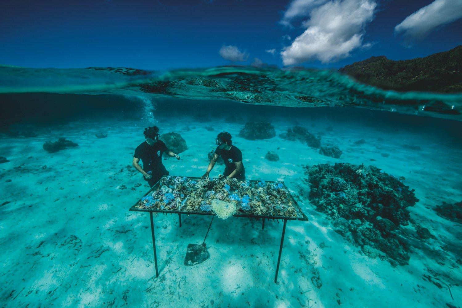Нове життя рифів: дослідники National Geographic за 6 років пересадили 6000 фрагментів коралів - зміни клімату - 22 ryf
