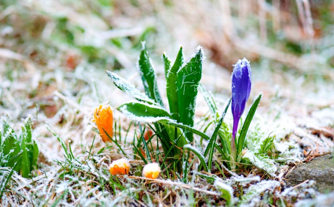 Нічні морози та вітряно вдень: погода 24 березня на Київщині - погода - 24 pogoda3