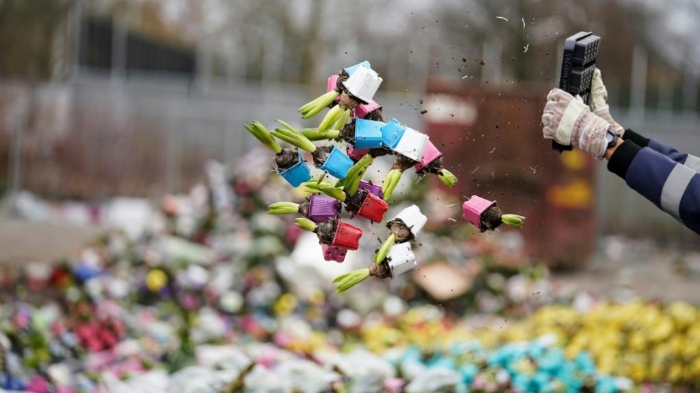 Через пандемію в світі нідерландці змушені щодня викидати на смітник мільйони квітів - тюльпани, Нідерланди, коронавірус - 25 tsvety