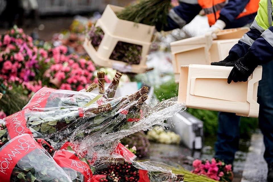 Через пандемію в світі нідерландці змушені щодня викидати на смітник мільйони квітів - тюльпани, Нідерланди, коронавірус - 25 tsvety3