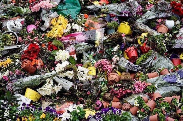 Через пандемію в світі нідерландці змушені щодня викидати на смітник мільйони квітів - тюльпани, Нідерланди, коронавірус - 25 tsvety5