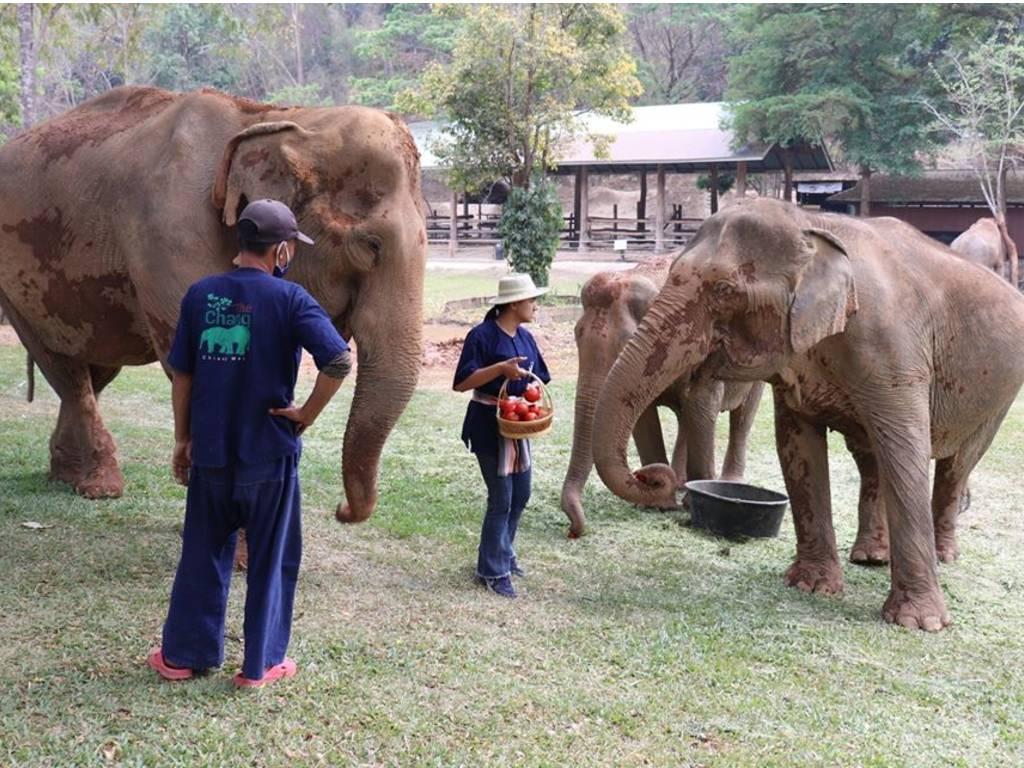 У Таїланді завдяки коронавірусу припинили експлуатувати слонів - коронавірус - 30 slon