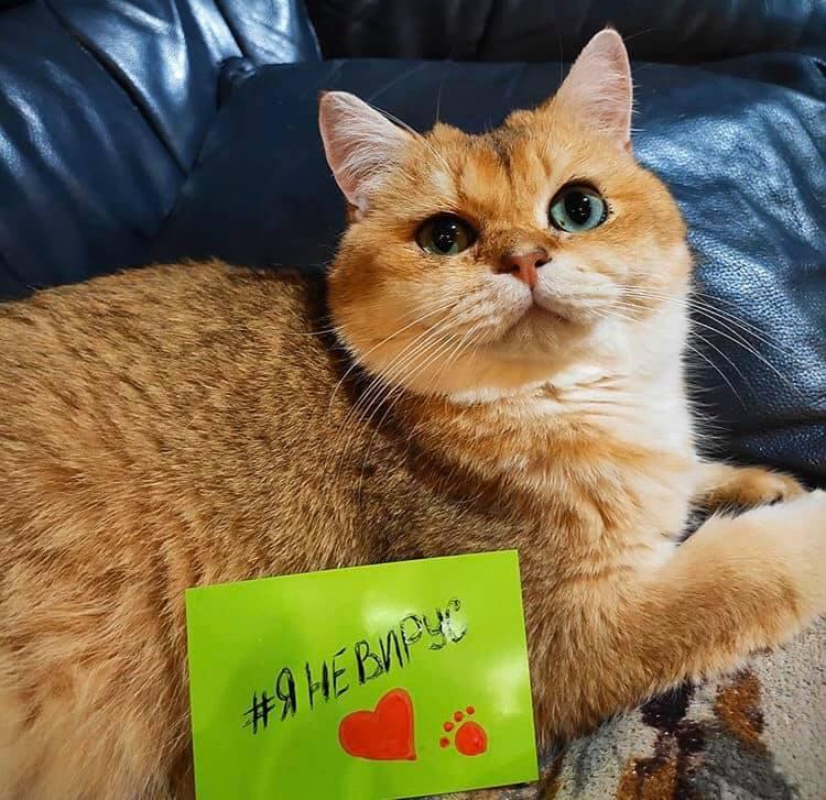 #яНеВірус: українців просять публікувати фото своїх чотирилапих друзів з хештегом - домашні тварини - 31 yanevyrus2