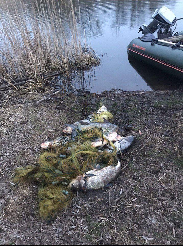 Володарський район: небайдужі громадяни виявили сітку із рибою (відео) -  - 89437047 2823372467739260 658868861042425856 o