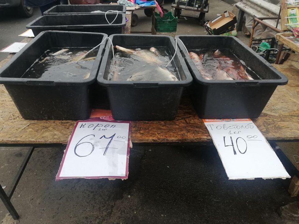 На київському ринку виявили майже 200 кг риби без жодних документів -  - 89850479 2840770849332755 2362252435369492480 o